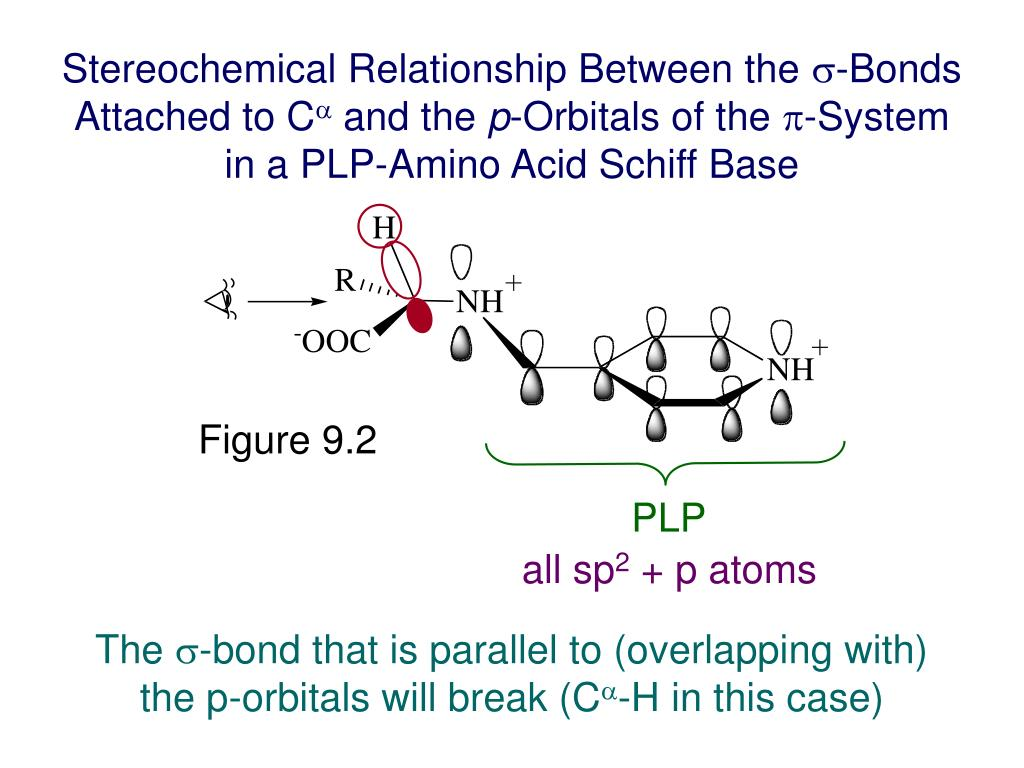 Stereochemical Relationship Between the
