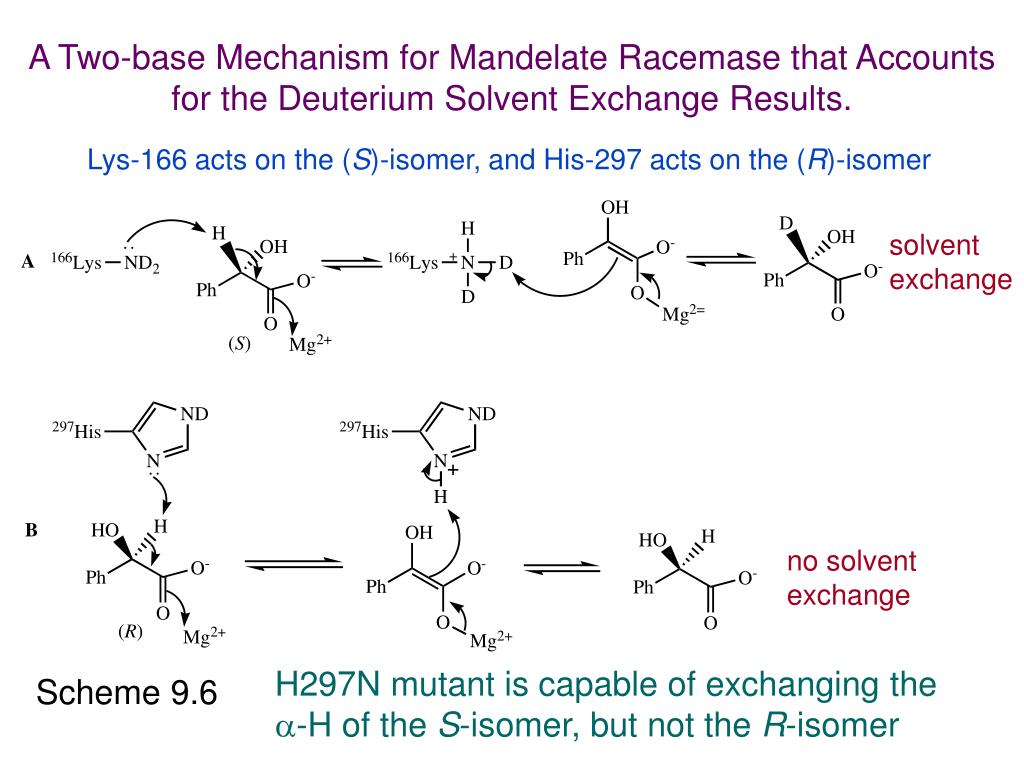 A Two-base Mechanism for Mandelate Racemase that Accounts for the Deuterium Solvent Exchange Results.
