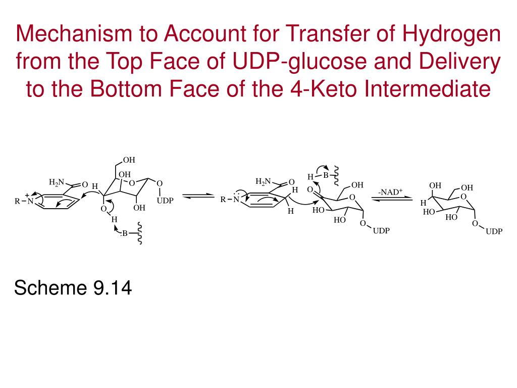 Mechanism to Account for Transfer of Hydrogen from the Top Face of UDP-glucose and Delivery to the Bottom Face of the 4-Keto Intermediate