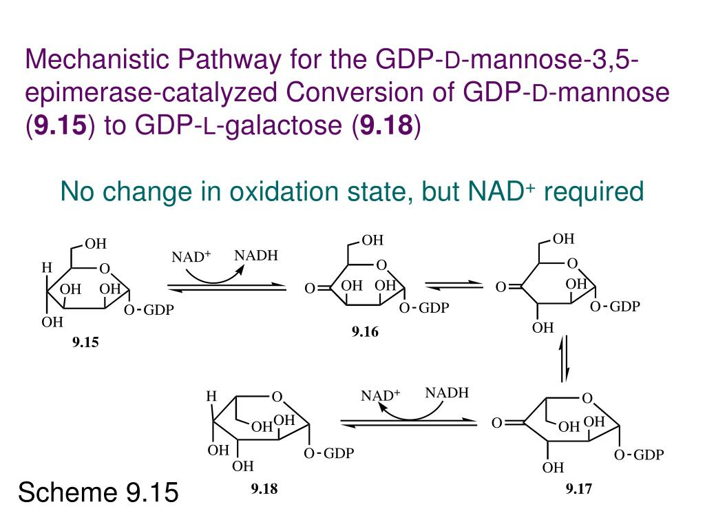 Mechanistic Pathway for the GDP-
