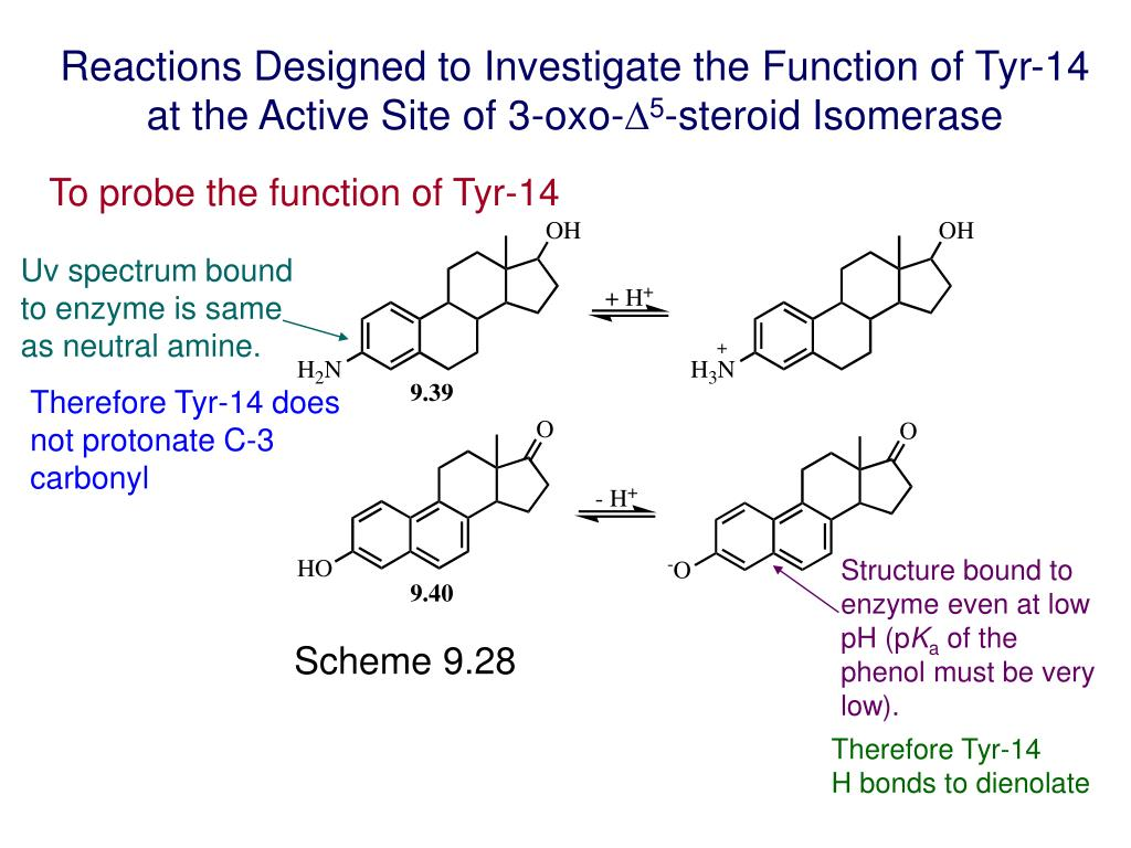 Reactions Designed to Investigate the Function of Tyr-14 at the Active Site of 3-oxo-