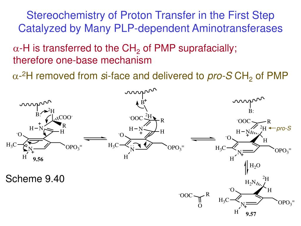 Stereochemistry of Proton Transfer in the First Step Catalyzed by Many PLP-dependent Aminotransferases