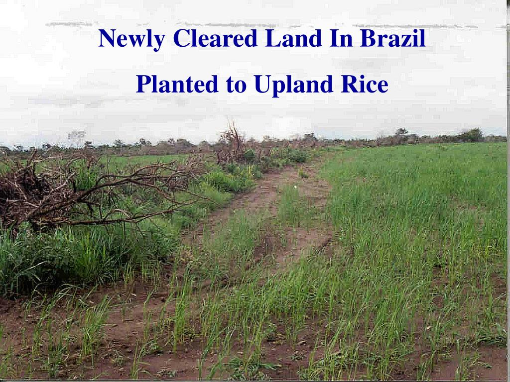 Newly Cleared Land In Brazil