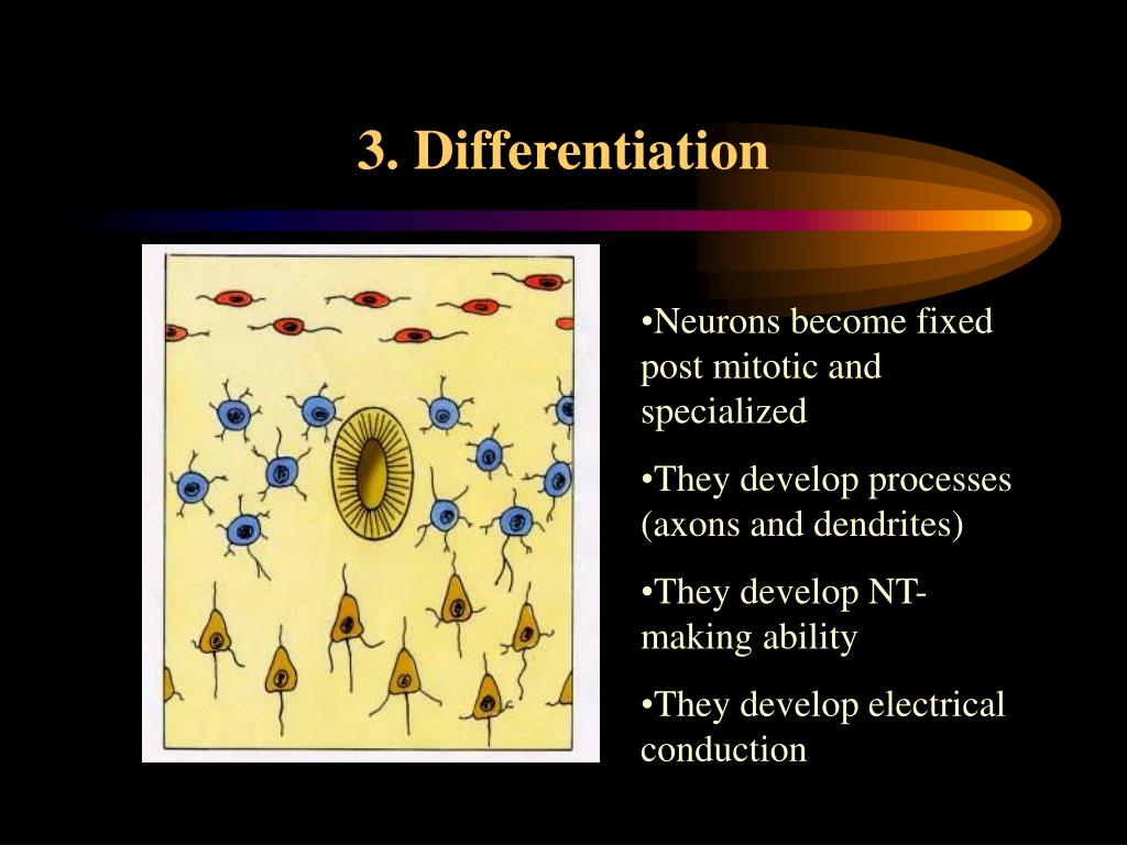 3. Differentiation