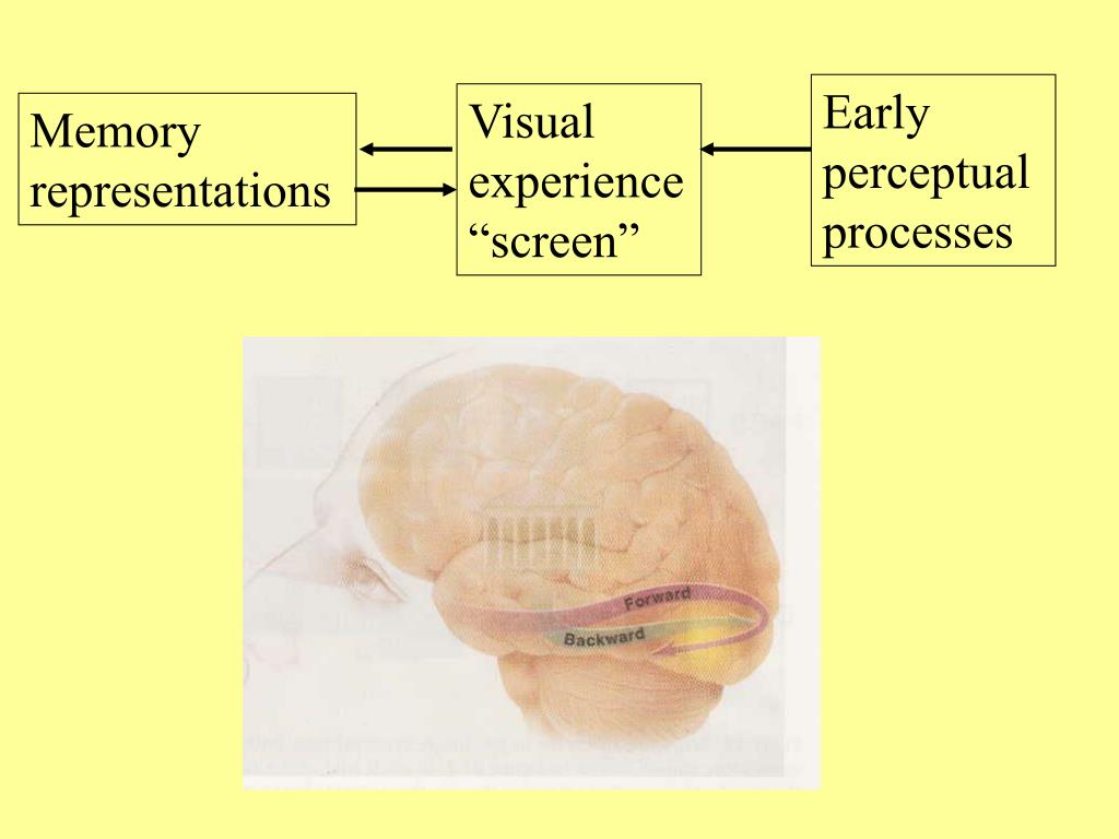 Early perceptual processes