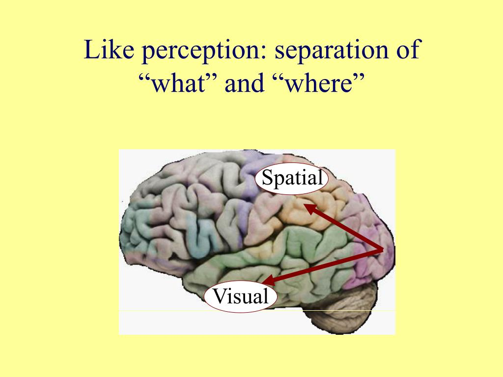 "Like perception: separation of ""what"" and ""where"""
