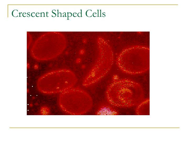 Crescent Shaped Cells
