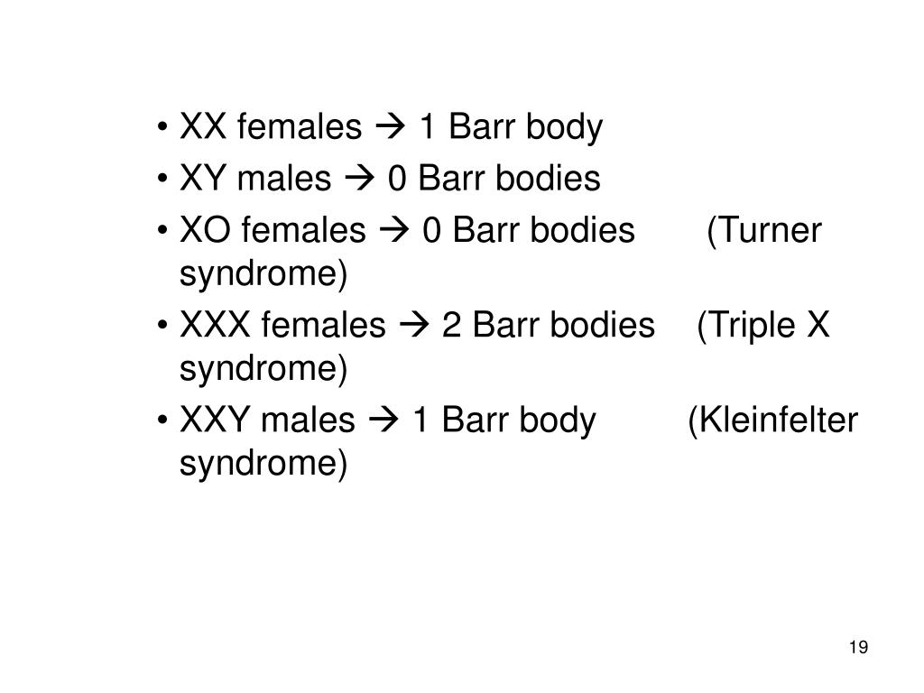 XX females