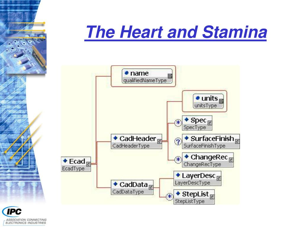 The Heart and Stamina