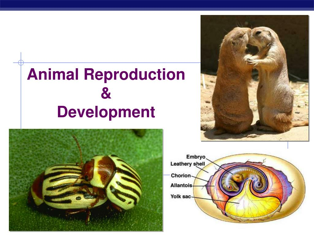 Animal Reproduction