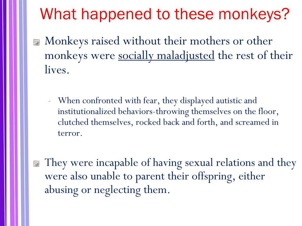 What happened to these monkeys?