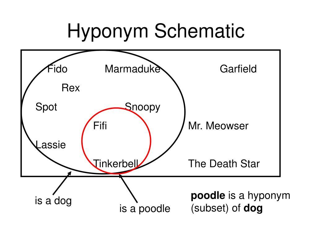 Hyponym Schematic