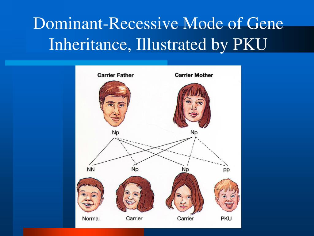 Dominant-Recessive Mode of Gene Inheritance, Illustrated by PKU
