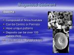 biogenous sediment