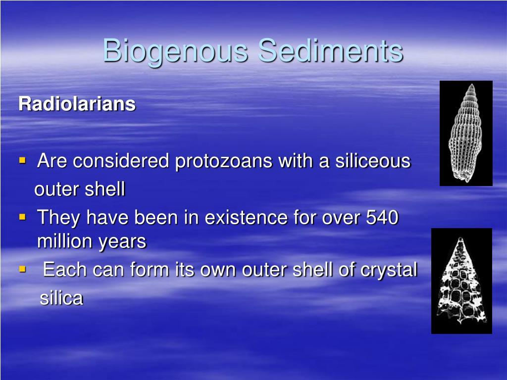 Biogenous Sediments