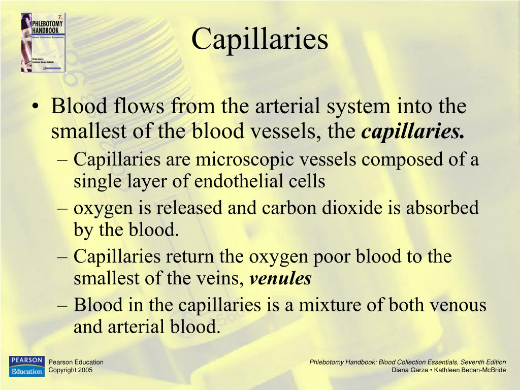 Blood flows from the arterial system into the smallest of the blood vessels, the