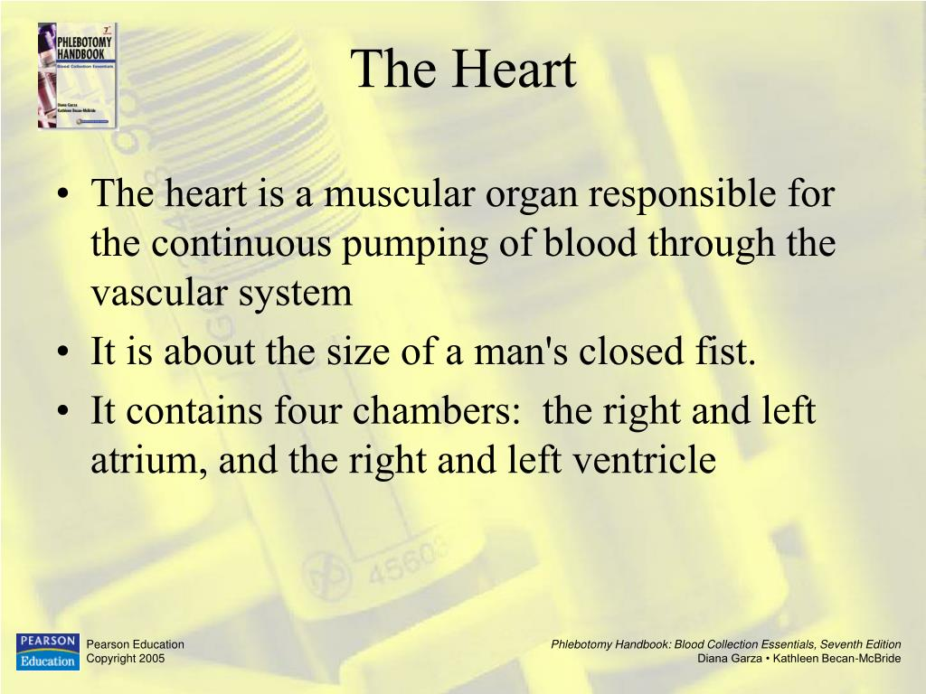 The heart is a muscular organ responsible for the continuous pumping of blood through the vascular system