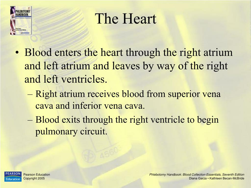 Blood enters the heart through the right atrium and left atrium and leaves by way of the right and left ventricles.