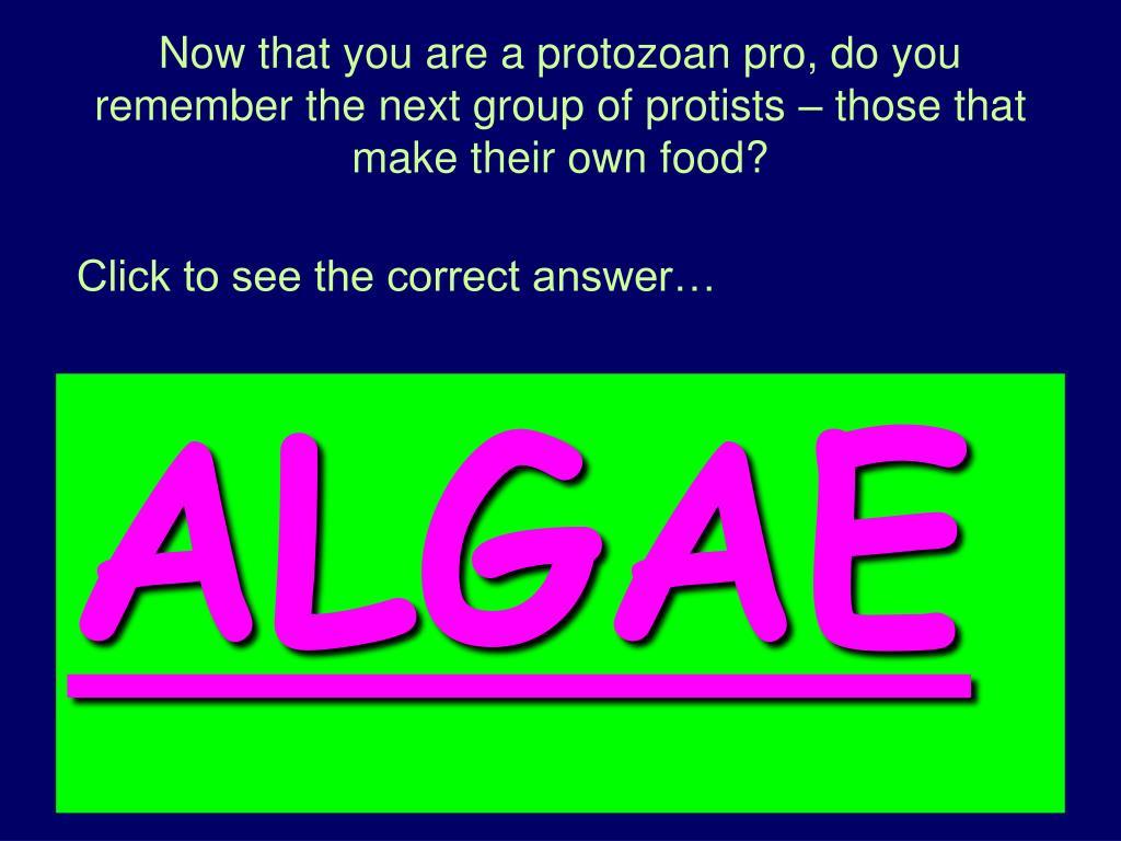 Do Protozoans Make Their Own Food