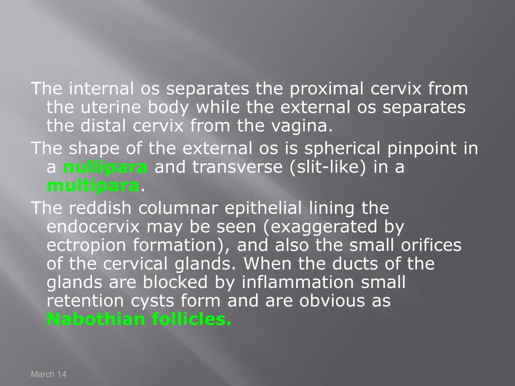 The internal os separates the proximal cervix from the uterine body while the external os separates the distal cervix from the vagina.