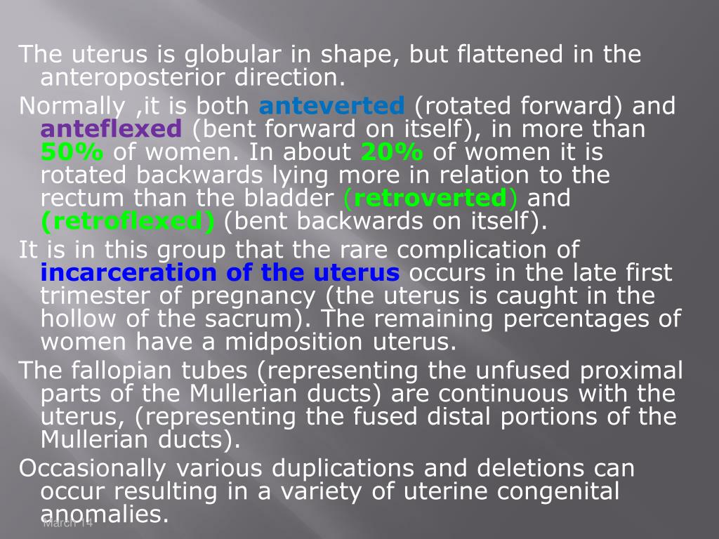 The uterus is globular in shape, but flattened in the anteroposterior direction.