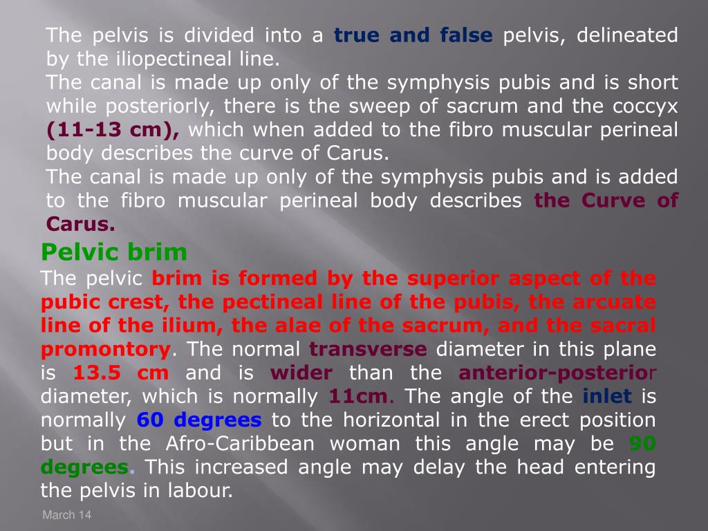 The pelvis is divided into a