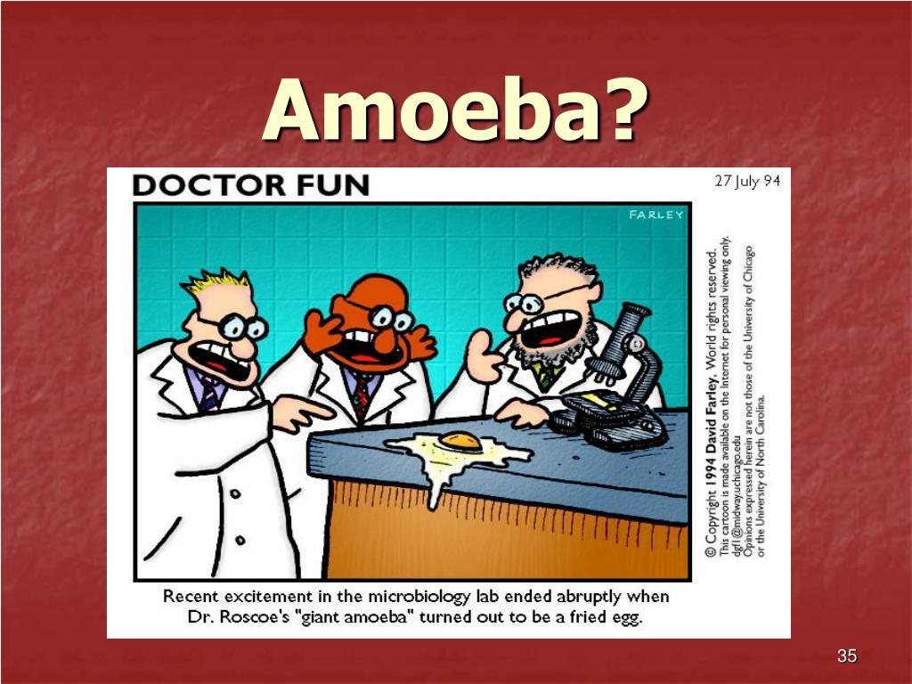 Amoeba?