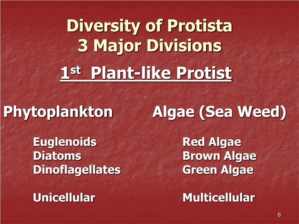 Diversity of Protista