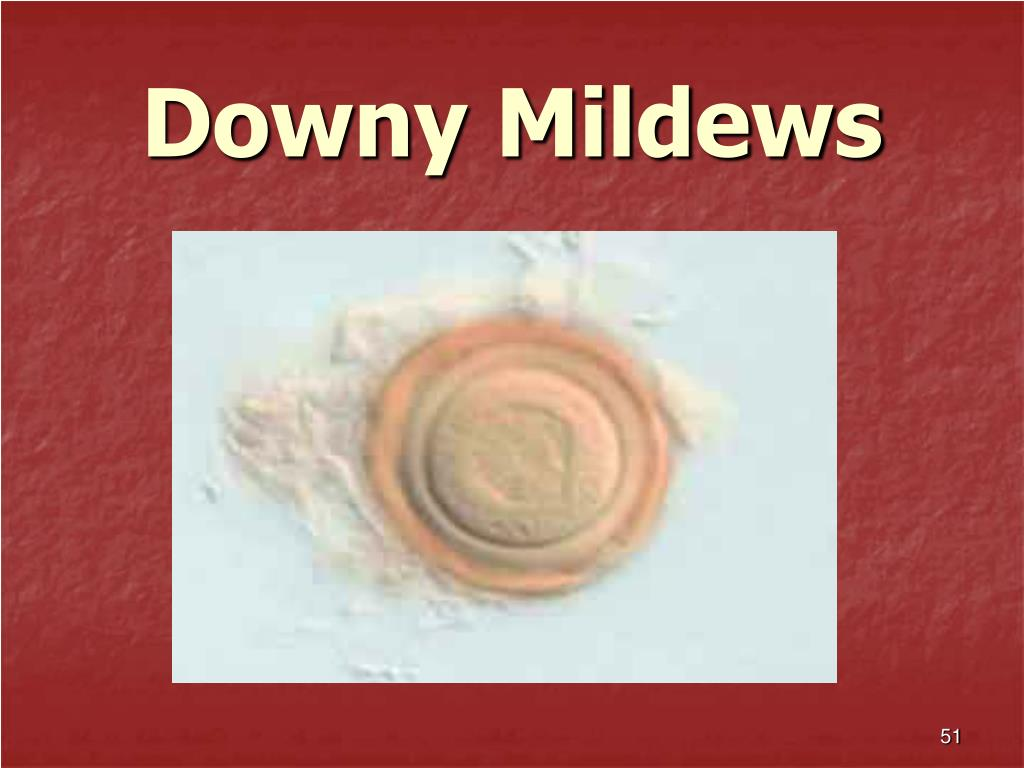 Downy Mildews