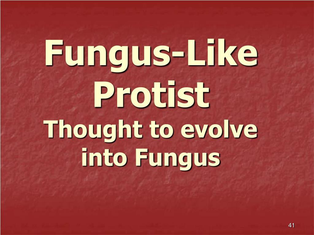 Fungus-Like Protist