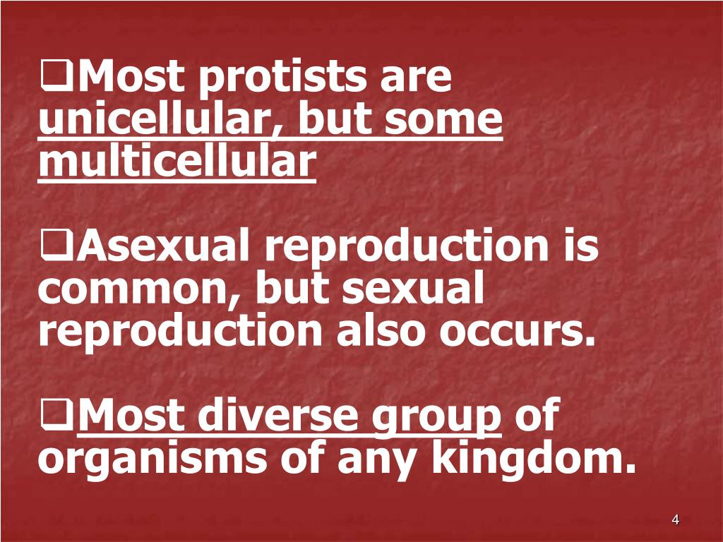 Most protists are