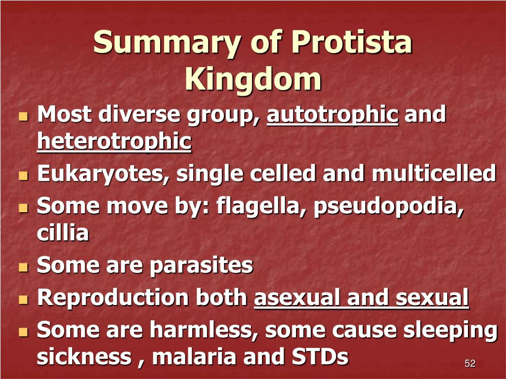 Summary of Protista Kingdom
