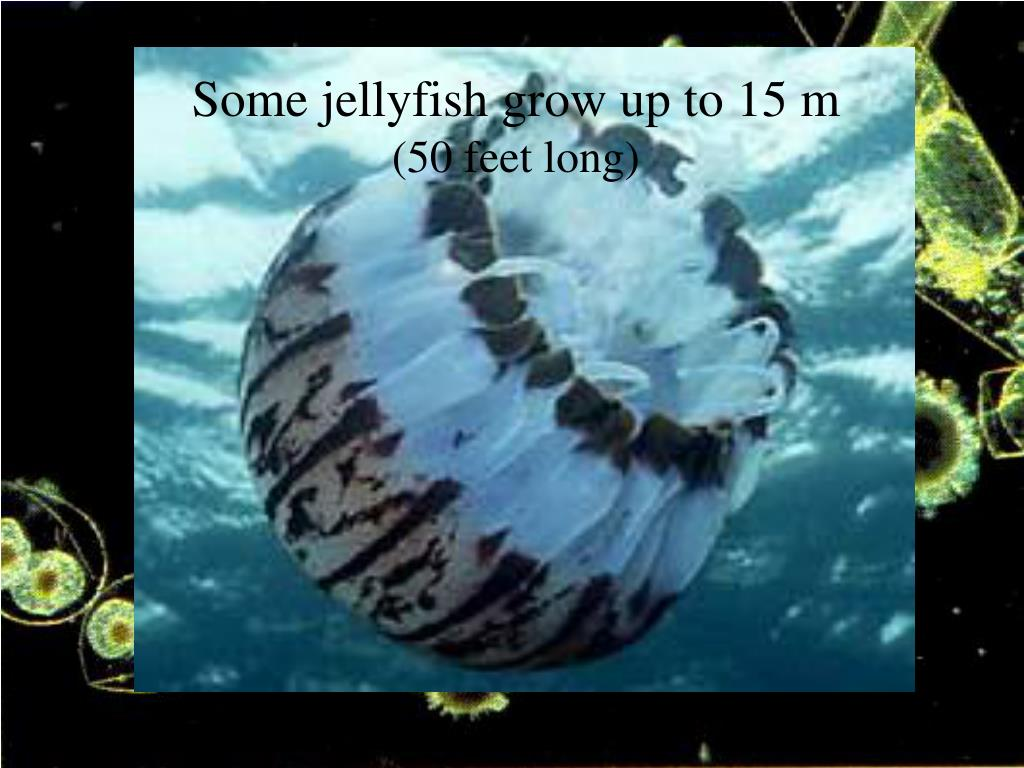 Some jellyfish grow up to 15 m