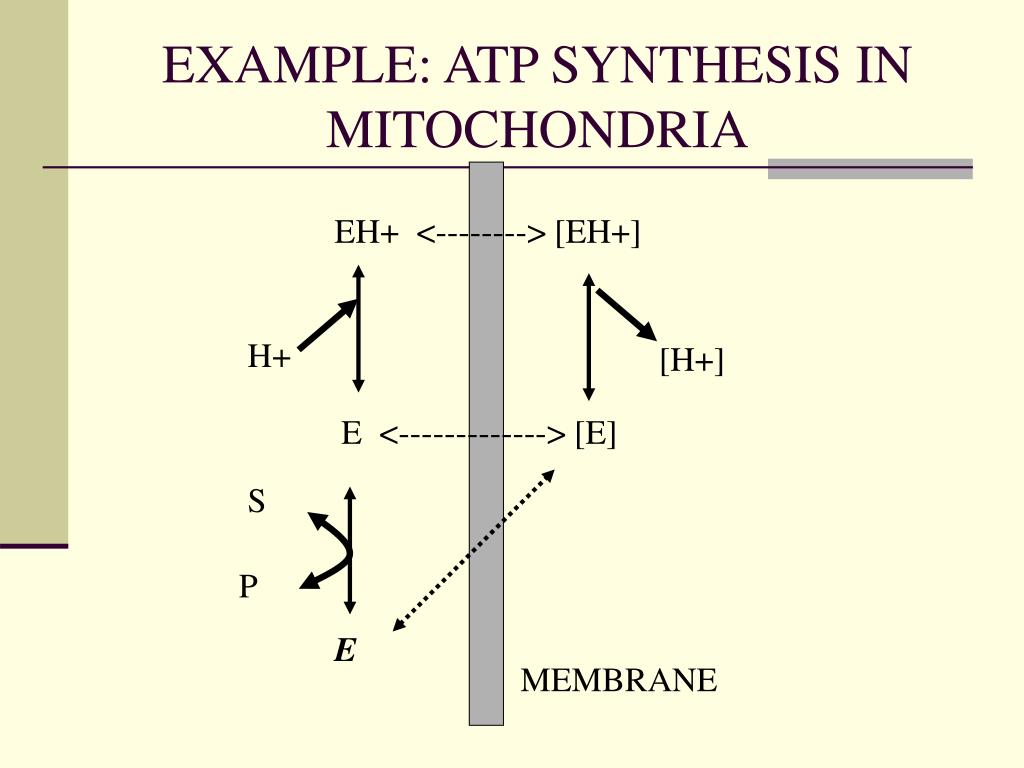 EXAMPLE: ATP SYNTHESIS IN MITOCHONDRIA