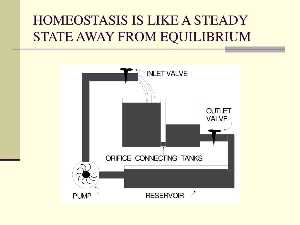 HOMEOSTASIS IS LIKE A STEADY STATE AWAY FROM EQUILIBRIUM
