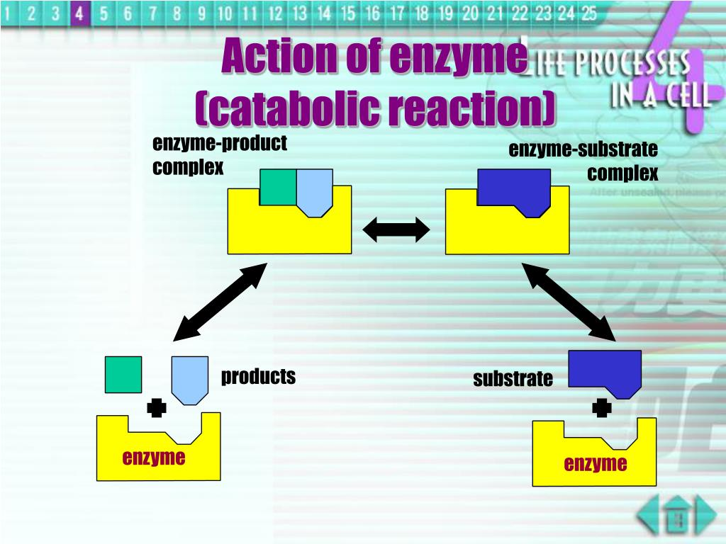 enzyme-product complex