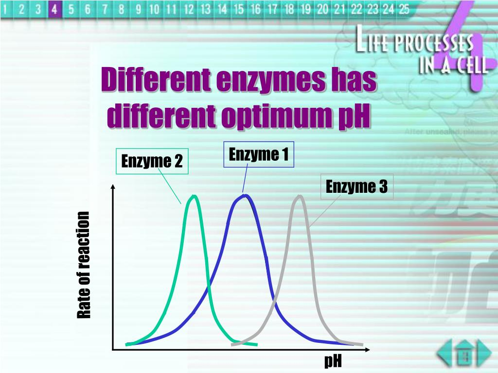Enzyme 2