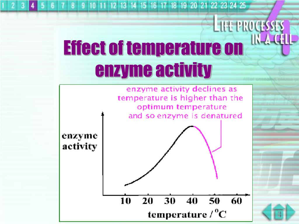 Effect of temperature on enzyme activity