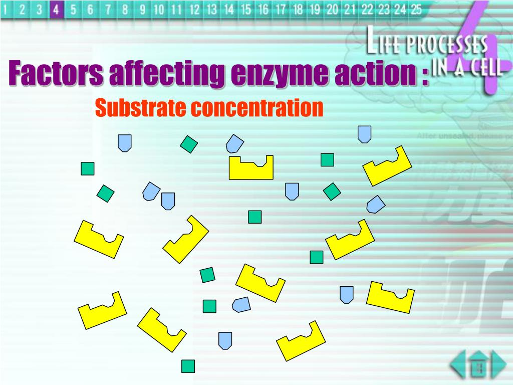 Factors affecting enzyme action :