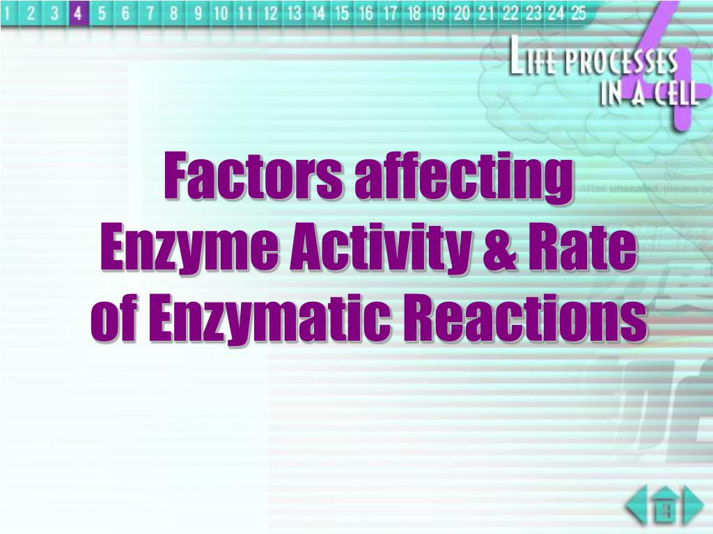 Factors affecting Enzyme Activity & Rate of Enzymatic Reactions