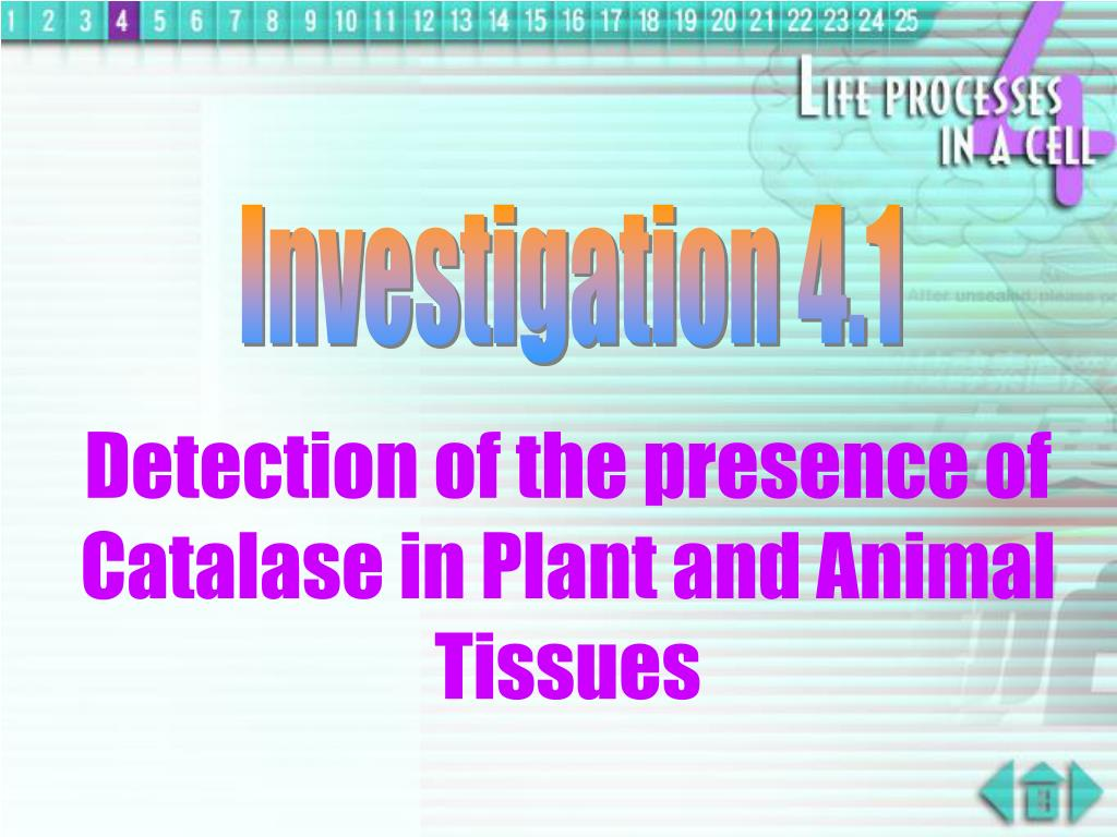 Investigation 4.1