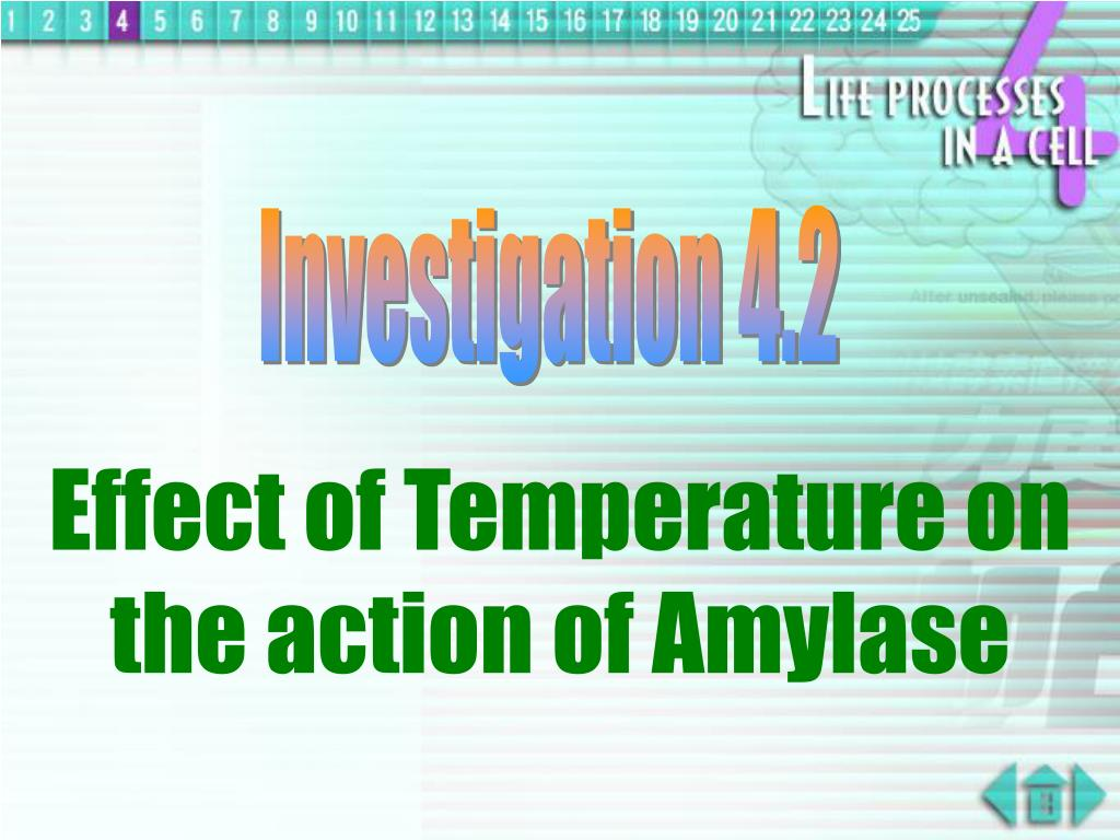 Investigation 4.2