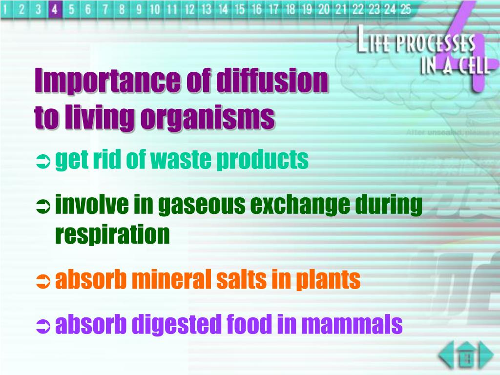 Importance of diffusion             to living organisms