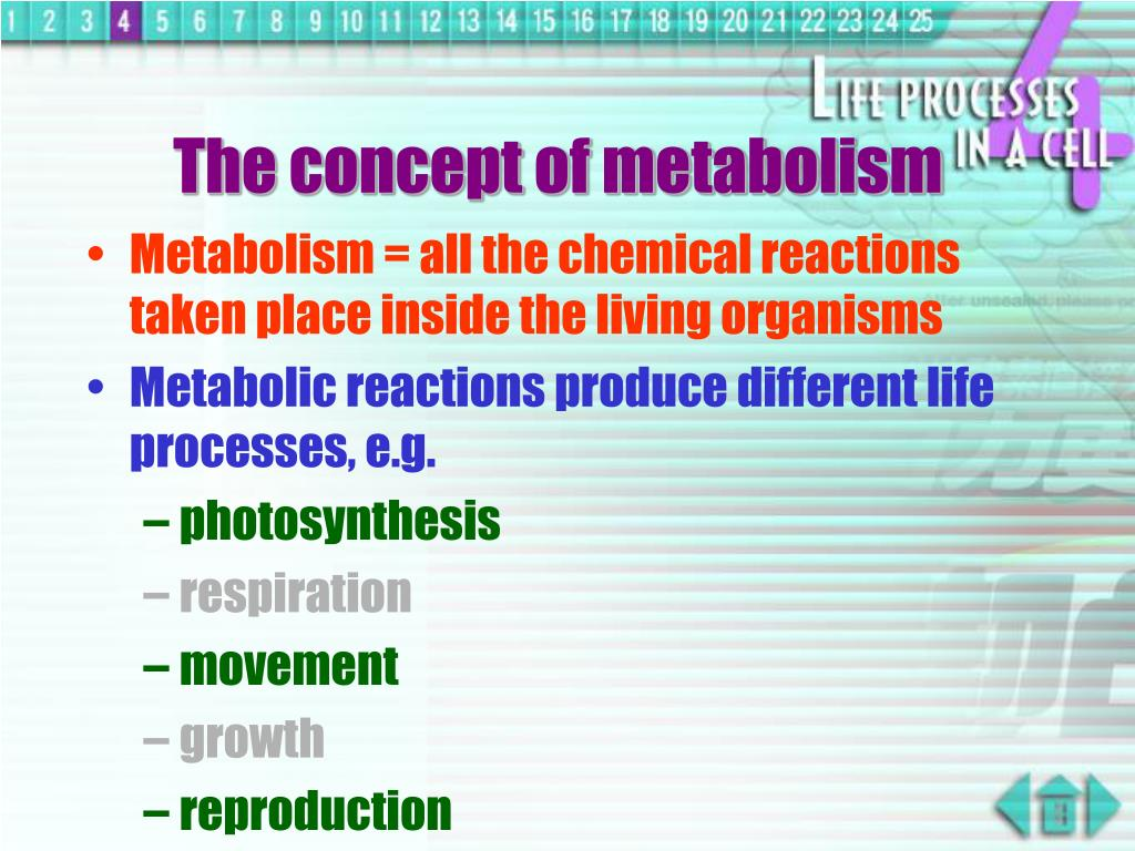 The concept of metabolism