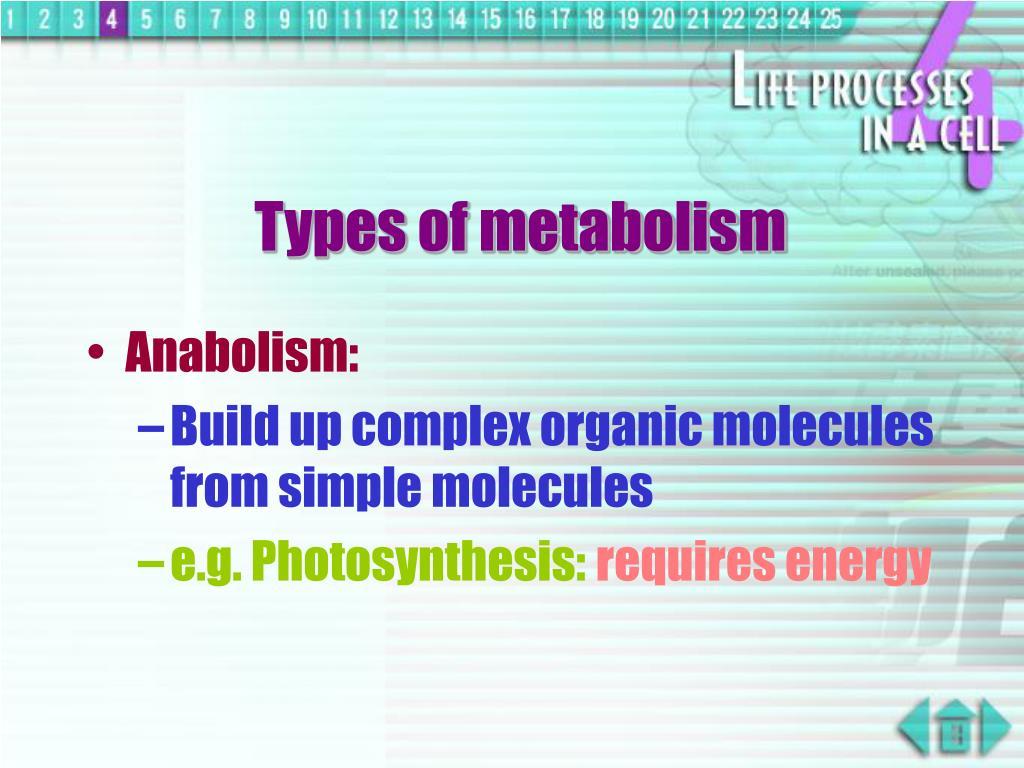 Types of metabolism