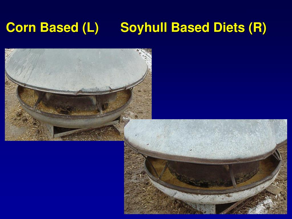 Corn Based (L)      Soyhull Based Diets (R)