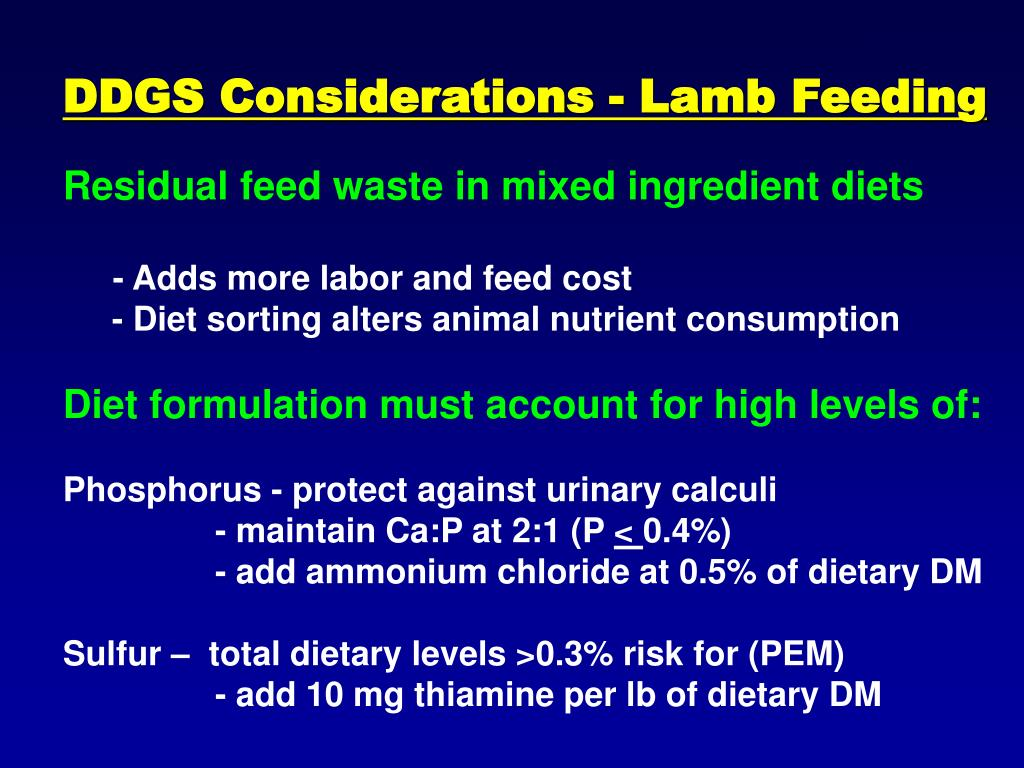 DDGS Considerations - Lamb Feeding