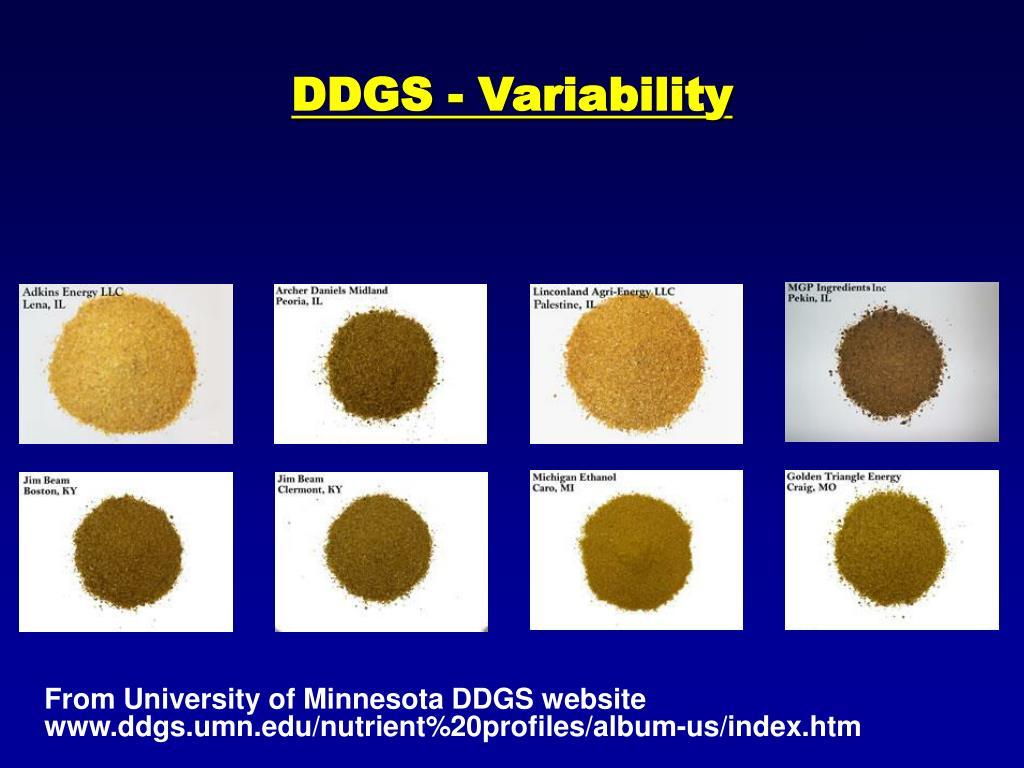 DDGS - Variability