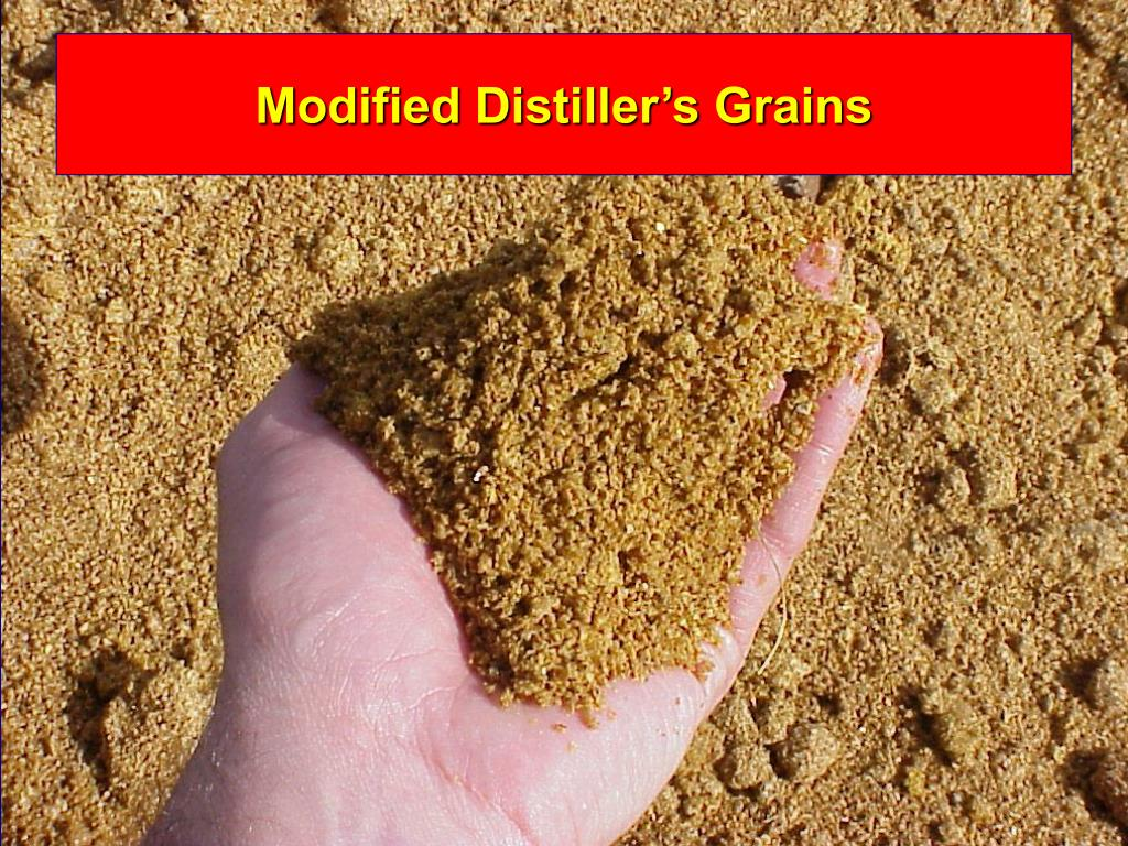 Modified Distiller's Grains