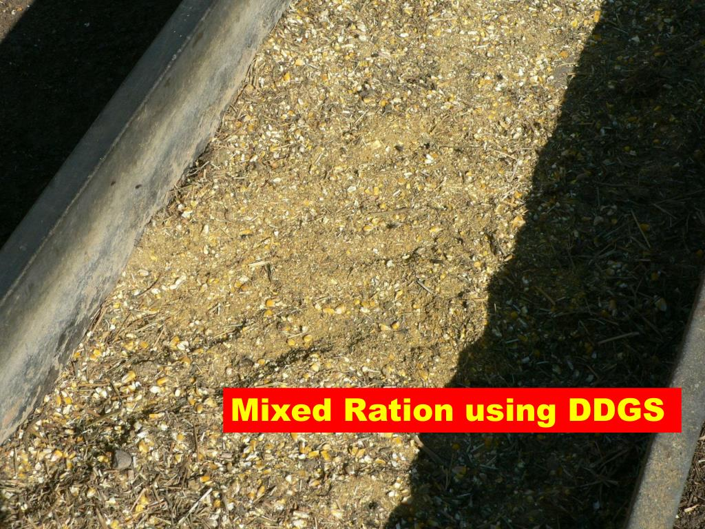 Mixed Ration using DDGS